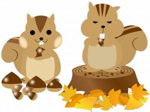 ハムスターやリスはどんぐりを食べる?動物への正しい与え方
