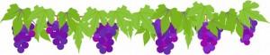 自宅でぶどうを栽培するときに注意したい病気(枯れ・黒ずみ)と対処法