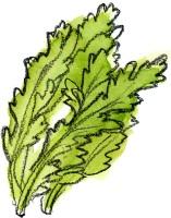 お味噌汁の具に入っている春菊に栄養はあるの?味噌との相性は?