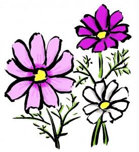 コスモスの咲く時期は、地域によってどう違うの?