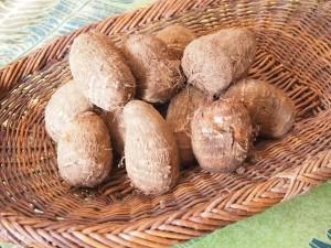 家庭で栽培した里芋を収穫した後の効果的な保存方法とは?
