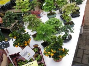 自宅でみかんを種から栽培する方法は?