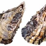 牡蠣の冷凍保存期間は?おすすめの冷凍方法もご紹介!