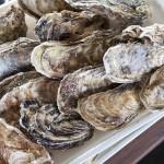 牡蠣のシーズンは?食べ放題のおすすめ店(広島・三重・岡山)